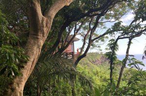 Un lodge enserré dans la nature