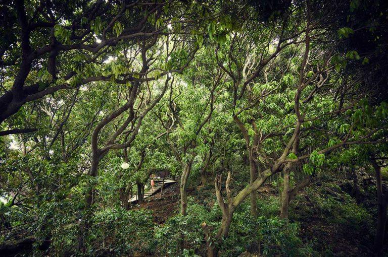Nature entourant les lodges